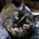 猫のマーブル二十歳