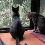 庭をながめるシマシマ猫2匹と・・・