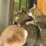 野鳥をがん見する猫たち