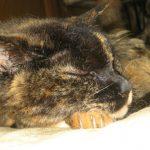 猫のマーブル23歳!!