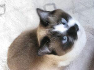 毎日が猫の日