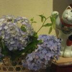 花にちょっかい出す招き猫・・・?